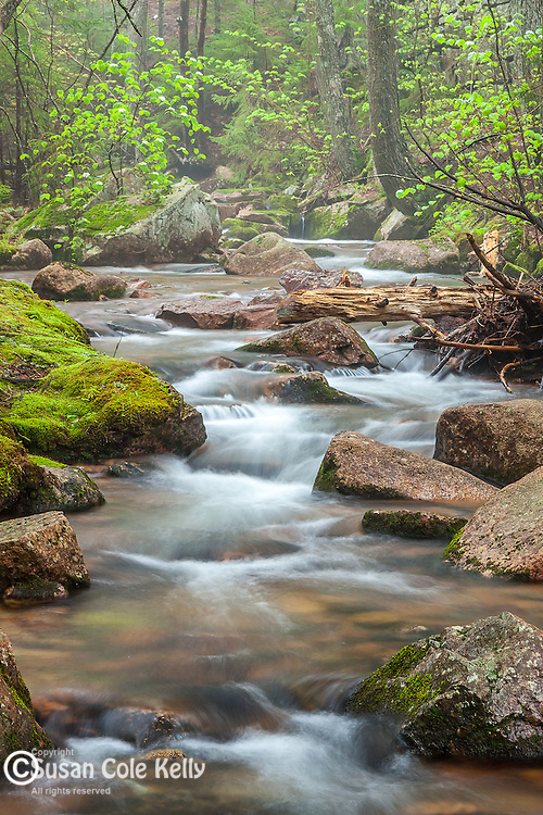 Jordan Stream in Acadia National Park, Downeast, ME, USA