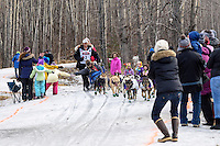 Jessie Royer and team run past spectators on the bike/ski trail with an Iditarider in the basket during the Anchorage, Alaska ceremonial start of the 2015 Iditarod race. Photo by Ed Bennett/IditarodPhotos.com