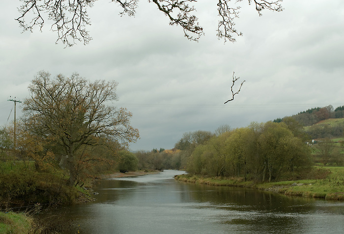 The River Wye at Builth Wells. The falling branch is suspended by discarded fishing line. Wales 2007.