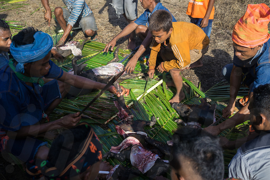March 25, 2016 - Wainyapu (Indonesia). Villagers cut the bodies of two pigs and a dog that have been sacrificed for the Good Friday. In rotation, each family in the village provide animals such as pigs, chickens and dogs for being sacrificed during religious ceremonies such as Christmas, Easter, funerals or weddings. © Thomas Cristofoletti / Ruom