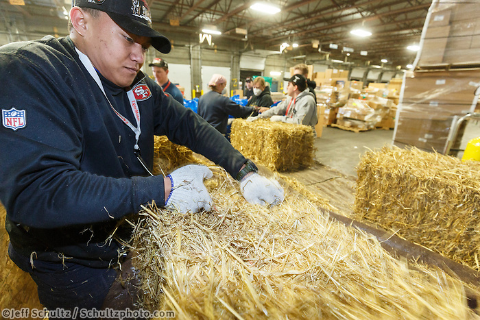 Getting ready for Iditarod 2016, a volunteer moves a bale from a shipping container while others bag, zip-tie, stack and shrinkwrap pallets of straw and hay on Thursday, February 11,2016  at Airland Transport in Anchorage.  Nearly 1700 bales will be sent out to over 20 checkpoints along the trail. Iditarod 2016