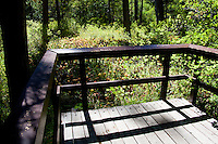 One of two viewing platforms at the Darlingtonia Trail in the Smith River National Recreation Area.