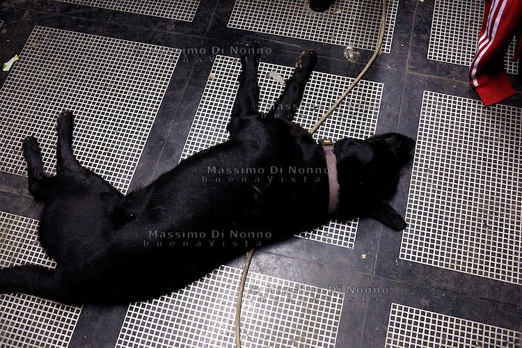 Milano: il collettivo Macao occupa la torre Galfa per farne un centro culturale. Un cane