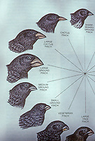"Biology:  Darwin's Finches.  Peter R. Grant, ""Natural Selection and Darwin's Finches"", Scientific American, Oct. 1991.  Reference only."