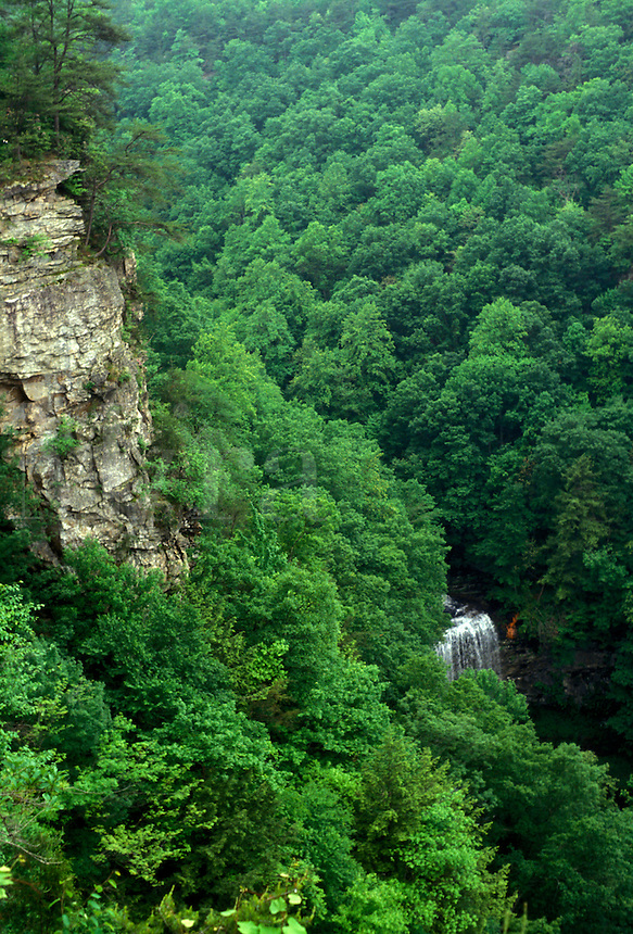 AJ2663, forest, Cloudland Canyon State Park, Appalachian Mountains, North Georgia, Georgia, Scenic view of a waterfall flowing through the dense green forest of Cloudland Canyon State Park near the town of Rising Fawn in the state of Georgia.