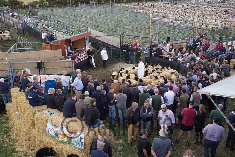 Thame Sheep Fair<br /> Picture Tim Scrivener 07850 303986<br /> &hellip;.covering agriculture in the UK&hellip;.