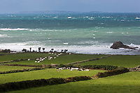Europe/France/Normandie/Basse-Normandie/50/Manche/Auderville: Cap de la Hague, Paturages et gros temps au Port de Goury  // Europe/France/Normandie/Basse-Normandie/50/Manche/Auderville: pasture near Port Goury