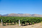 Views of vineyards along Foxen Canyon Road in California