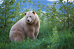 Kermode Bear, British Columbia, Canada