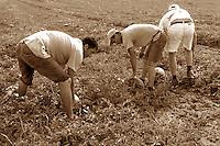 Contadini nei campi. Peasants in the fields..