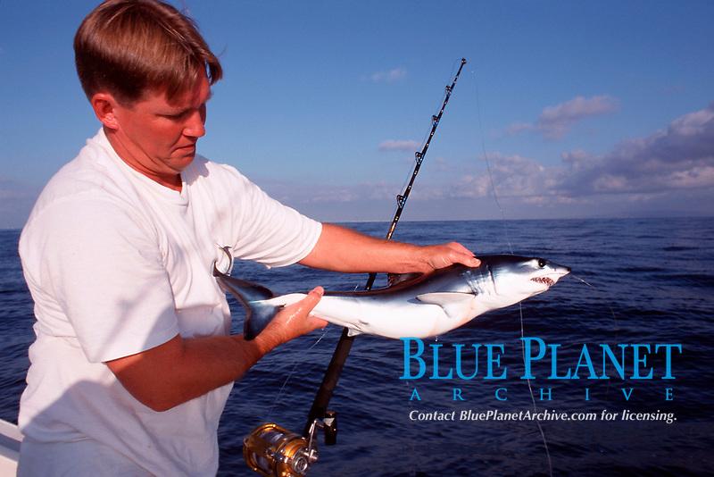 sport fisherman holding, shortfin mako shark pup, Isurus oxyrinchus, Redondo Beach, California, East Pacific Ocean