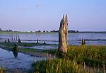 ATBK25 Mudflats and wetland environment estuary Blythburgh Suffolk England