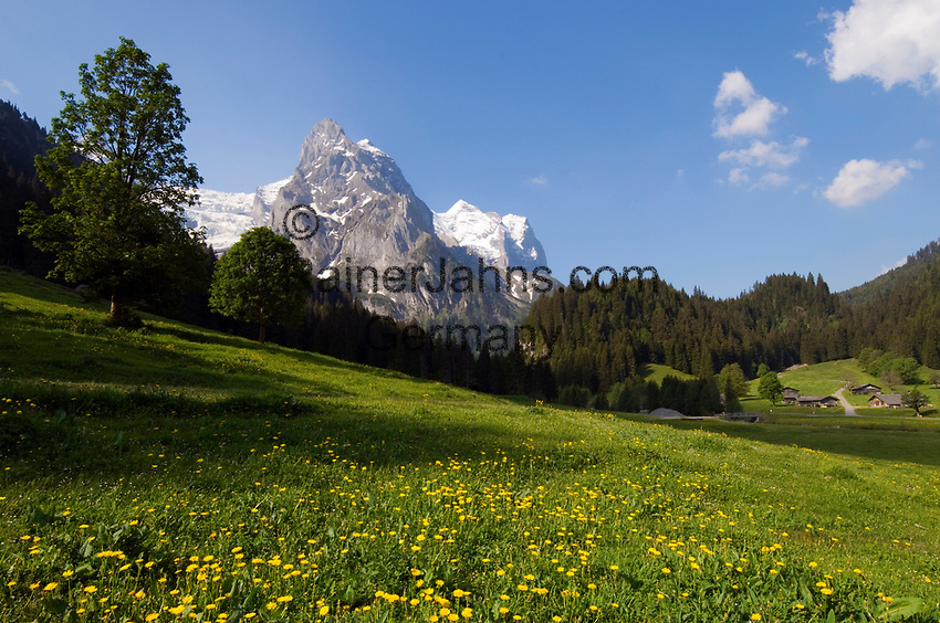CHE, SCHWEIZ, Kanton Bern, Berner Oberland, Rosenlauital: Almwiesen und Almhuetten vorm Rosenlauigletscher, Klein Wellhorn und Wetterhorn (v.l.n.r.) | CHE, Switzerland, Bern Canton, Bernese Oberland, Rosenlaui valley: Alpine pasture, huts, Rosenlaui Glacier, Klein Wellhorn + Wetterhorn mountains (left to right)