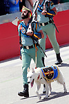 Members of the Spanish Legion parade with their pet dog during the Armed Forces Day. May 27 ,2017. (ALTERPHOTOS/Acero)
