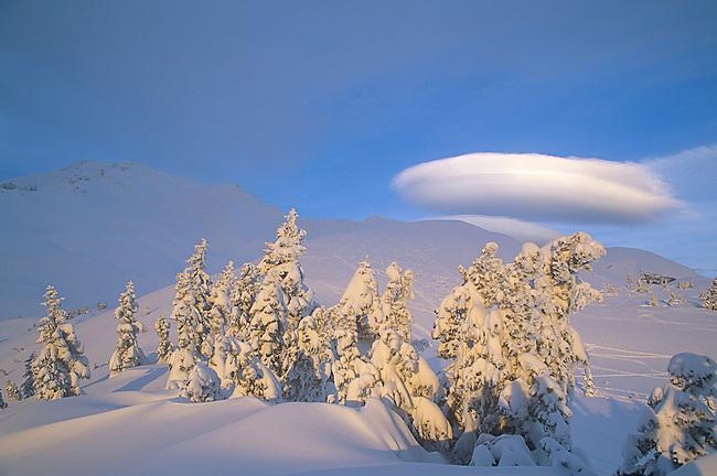 Winter, Mt. Shasta, California