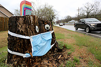 A large tree stump at the corner of Mission Boulevard and Charles Avenue is decorated Thursday, March 19, 2020, with a medical mask and eyes in Fayetteville. The stump is referred to as Stumpy and decorated regularly by neighbors during the holidays, special events or other relevant occurrences. Check out nwaonline.com/200320Daily/ and nwadg.com/photos for a photo gallery.<br /> (NWA Democrat-Gazette/David Gottschalk)