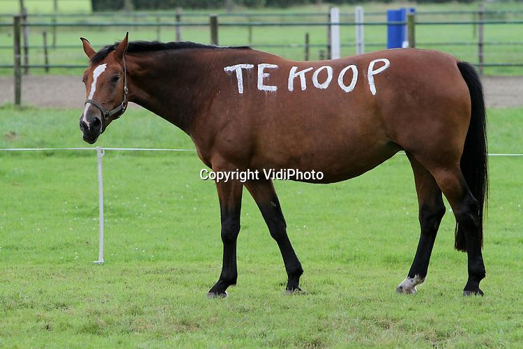 """Foto: VidiPhoto..VOORHUIZEN - In een wei langs de Rijksweg in Voorhuizen loopt een paard dat zichzelf te koop aanbiedt. Eigenaar Van Veldhuisen wil van de merrie af en bedacht een ludieke actie. Met witkalk schilderde hij op de ene zijde van het paard """"Sale"""" en op de andere kant """"Te Koop"""". De actie trekt veel bekijks. Volgens de eigenaar is de witkalk niet schadelijk voor het dier en zijn de reacties alleen positief.."""