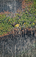 Forest fire burn area, northern Colorado. Sept 2012