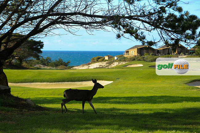 A general view of the 1st green, Spyglass Hill Golf Course during previews ahead of the AT&amp;T Pro-Am, Pebble Beach Golf Links, Monterey, California, USA. 06/02/2019<br /> Picture: Golffile | Phil Inglis<br /> <br /> <br /> All photo usage must carry mandatory copyright credit (&copy; Golffile | Phil Inglis)