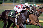 Horse race with two riders/horses neck and neck racing to the finish line, Longacres, Washington State, USA