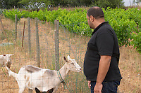Pierre Quinonero Domaine de la Garance. Pezenas region. Languedoc. A goat that also contributes to fertilizing the vineyards. Owner winemaker. France. Europe.