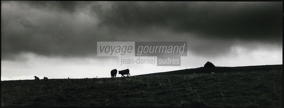 Europe/France/Midi-Pyrénées/12/Aveyron/env Laguiole : Vaches de race Aubrac en pâturage et buron (lieu de fabrication du fromage) sur les plateaux de l'Aubrac
