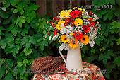 Carl, FLOWERS, photos, SWLA3971,#f# Blumen, Natur, flores, naturaleza