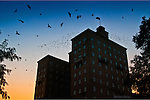 The Landing in Dayton Ohio (Monument Ave.) at dusk with birds in flight