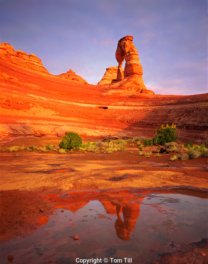 Reflection of Delicate Arch, Arches National Park, Utah     Free-standing natural arch reflected in rainwater pool   Entrada sandstones