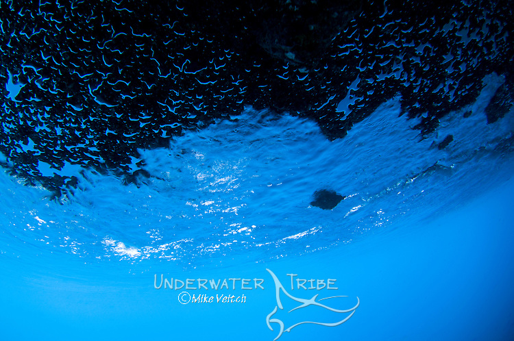 Water and bubbles trapped under an underwater ledge, Raja Ampat, West Papua, Indonesia, Pacific Ocean