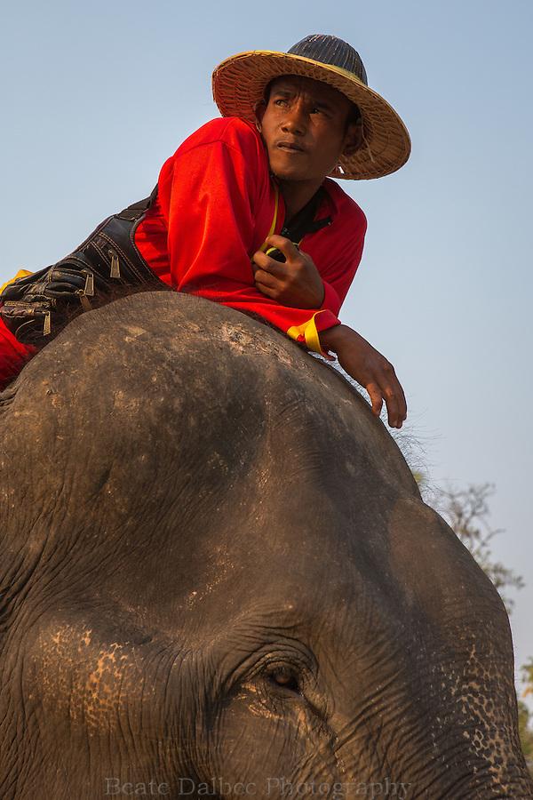 elephant and his handler, Ayutthaya, Thailand