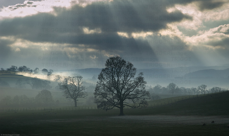 Crepuscular rays fall on sheep pasture on a frosty morning. Lake District, Cumbria, UK