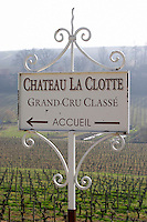 Vineyard. Chateau La Clotte Laclotte. Saint Emilion, Bordeaux, France