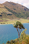 Lake Hawea and Cabbage Tree, New Zealand