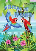 GIORDANO, CUTE ANIMALS, LUSTIGE TIERE, ANIMALITOS DIVERTIDOS,parrots, paintings+++++,USGI2974,#AC#, EVERYDAY