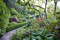 Entry pathway to California home framed by garden shady border with magnolia tree