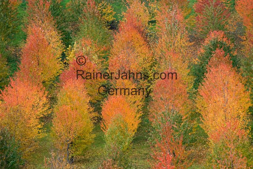 Italien, Piemont, Region Monferrato, Herbststimmung   Italy, Piedmont, region Monferrato, autumn mood