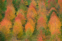 Italien, Piemont, Region Monferrato, Herbststimmung | Italy, Piedmont, region Monferrato, autumn mood