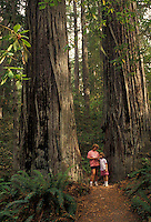 AJ3749, Redwood National Park, redwood, California, Mother and daughter (7 years old) dwarfed by the towering Redwood trees in Lady Bird Johnson Grove in Redwood Nat'l Park in the state of California.