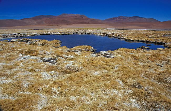 Route entre San Pedro de Atacama et Paso Jama. Salar de Pujsa. *** Salar de Pujsa between San Pedro de Atacama and Paso Jama, Chile.