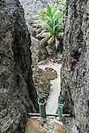 Ladder down to Togo Chasm on the island of Niue