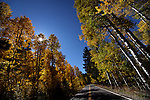 Fall leaves along the Carson River, seen near Markleeville, Ca., on Monday, Oct. 17, 2011..Photo by Cathleen Allison