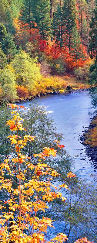 Fall colored trees on North Umpqua River, Oregon