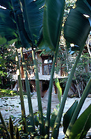 One of the houses seen through the garden´s plants. Photos for Jasai´s catalogue of the houses of Memo and the surrounding area