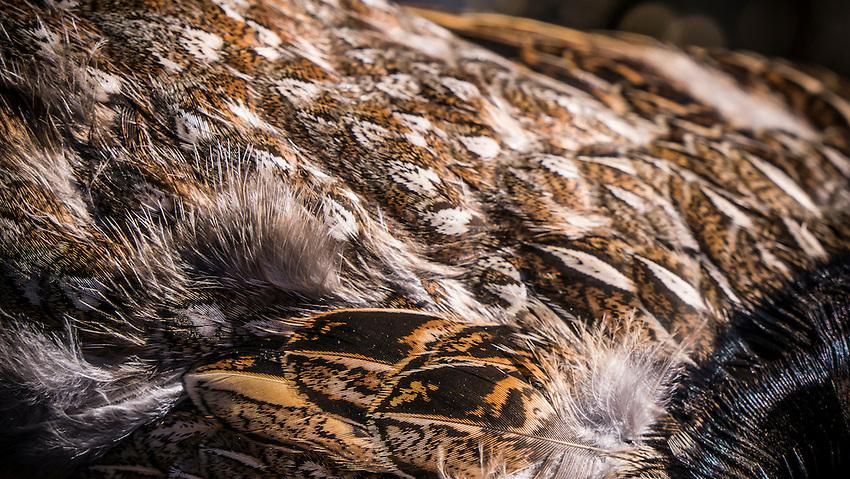 Upland bird hunting for ruffed grouse on Michigan's Upper Peninsula near Gwinn, Michigan.