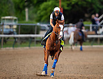 LOUISVILLE, KENTUCKY - MAY 01: Improbable prepares for the Kentucky Derby at Churchill Downs in Louisville, Kentucky on May 01, 2019. Evers/Eclipse Sportswire/CSM