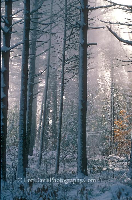 Natchaug Snow