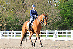 Class 8. Medium 75. British dressage (BD). Brook Farm Training Centre. Essex. 16/04/2017. MANDATORY Credit Ellen Szalai/Sportinpictures - NO UNAUTHORISED USE - 07837 394578