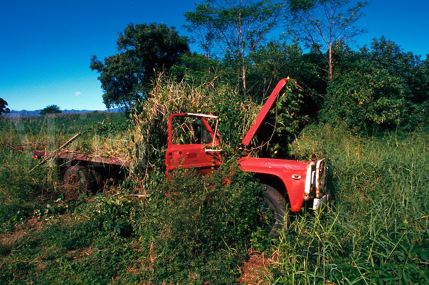 Remains of an old truck overgrown with weeds.