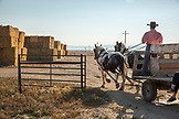 USA, Nevada, Wells, Cowboy and wrangler Clay Nannini leads a Horse-Drawn Wagon Ride at Mustang Monument, A sustainable luxury eco friendly resort and preserve for wild horses, Saving America's Mustangs Foundation